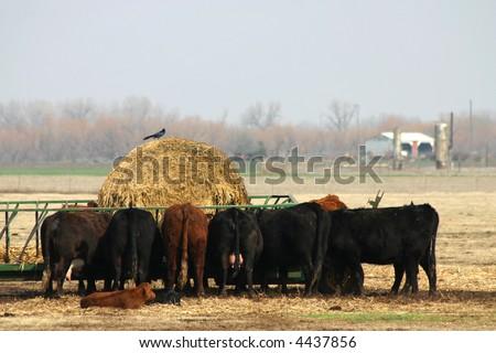 A photograph taken in Oklahoma. - stock photo