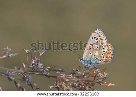 A photography of a beautiful butterfly in nature - stock photo