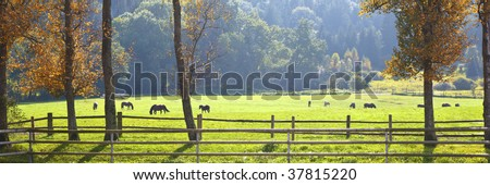 A photography of an autumn scenery with horses - stock photo