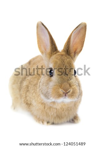 A picture of a close-up cute rabbit - stock photo