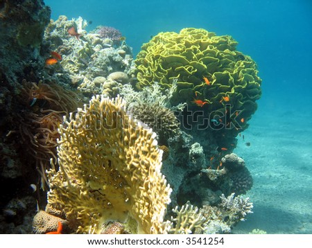 A picture of a coral reef. shot in the Red Sea - stock photo