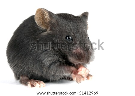 a picture of a little and cute mouse