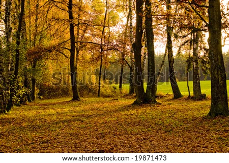 A picture of a small forest in autumn colors