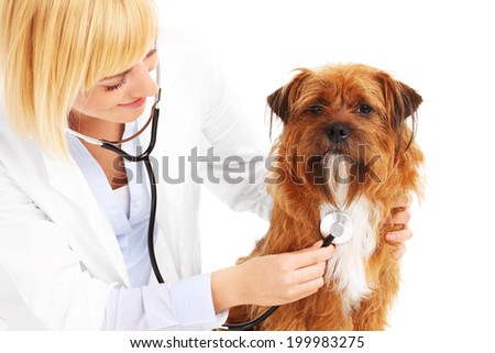 A picture of a vet examining a dog over white background - stock photo