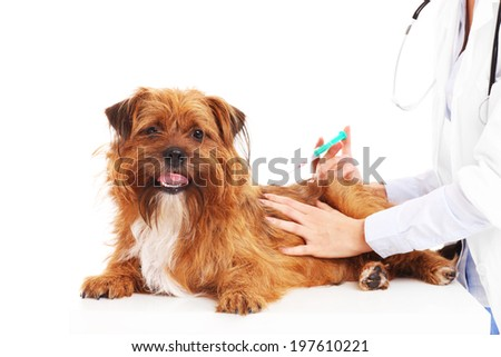 A picture of a vet injecting a dog over white background