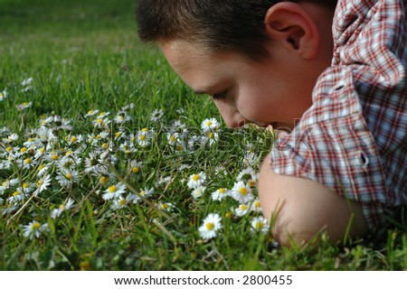 A picture of innocence: young boy in a field of daisies - stock photo