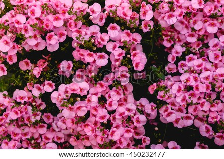 Picture tiny pink flowers stock photo download now 450232477 a picture of tiny pink flowers mightylinksfo