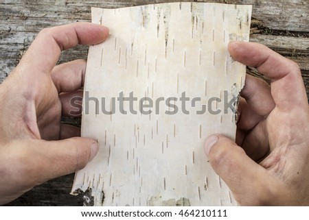 A piece of birch bark in the hands on a background of of the old logs outdoors