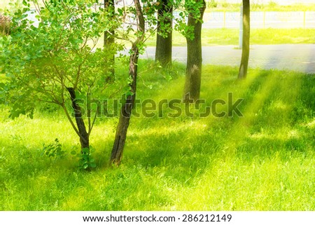A piece of green urban park with green trees, grass and shining sun - stock photo