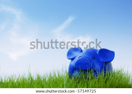 A piggy outside on the grass  and blue sky - stock photo