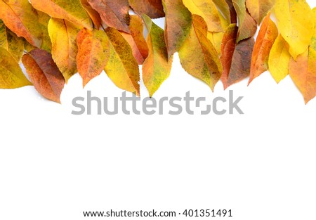 A pile of autumn leaves isolated on white background. - stock photo