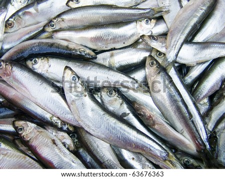 A pile of beautiful small fishes on a counter - stock photo