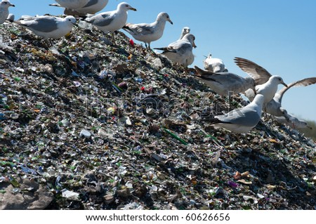 A pile of broken glass and trash in a landfill with birds looking for food - stock photo