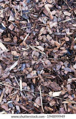A pile of brown autumn bark Mulch for background  - stock photo