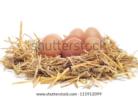 a pile of brown eggs in a nest on a white background - stock photo