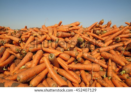 A pile of carrots - stock photo