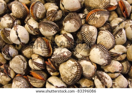 A pile of clams in a fish market - stock photo