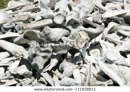 A pile of deer and bison bones in a meadow in spring in Winnipeg, Manitoba, Canada - stock photo