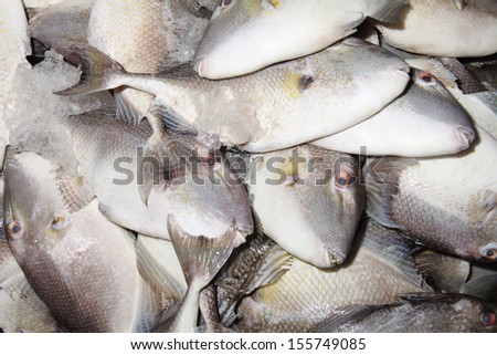 A pile of fresh fishes at fish market for sell