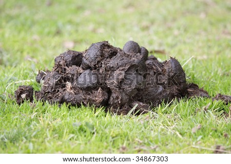 A pile of fresh horse manure on green grass. - stock photo
