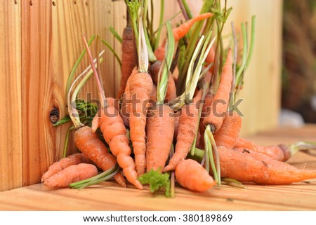 A pile of fresh young carrots - stock photo