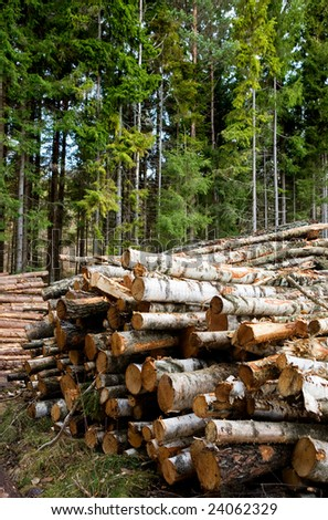 A pile of logs recently harvested - stock photo