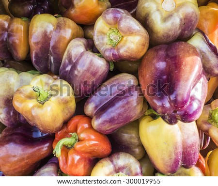 A pile of multicolored sweet peppers at local farm market. - stock photo