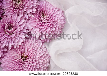 A pile of pink aster on white organza
