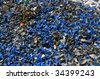 A pile of shredded plastic containers for recycling - stock photo