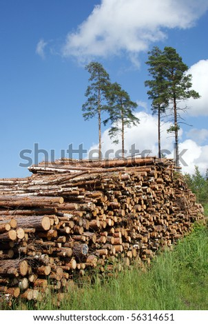 A Pile of Timber Logs in Pine Forest - stock photo