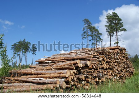 A Pile of Timber Logs Summer Landscape - stock photo