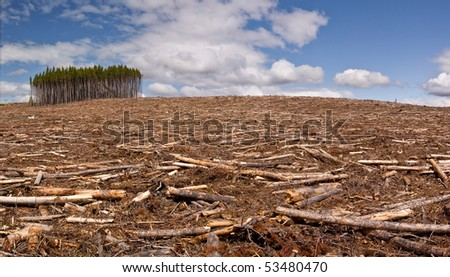 A pine forest is clearcut save for a small island of trees - stock photo