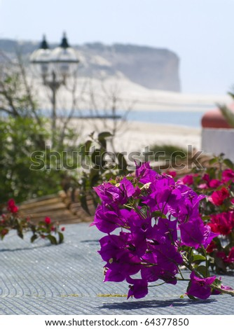 A pink Bougainvillea in a house with a view to the Obidos lagoon and sea, at the silvercoast in the Atlantic coast of Portugal - stock photo