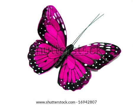 A pink butterfly isolated on white - stock photo