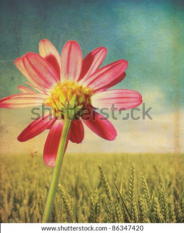 A pink daisy flower head and stem set over a green wheat background with a grunge style effect applied, set on a portrait format.