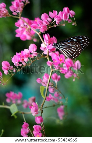 A Pink Flower and a butterfly - stock photo
