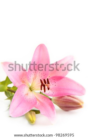 A pink lily flower, isolated on a white background. - stock photo