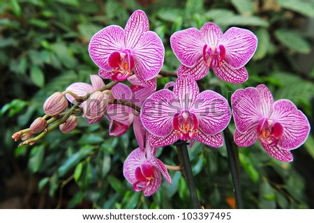 A pink orchid flower grows in a garden - stock photo