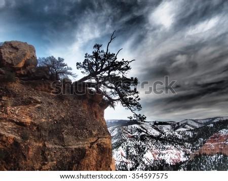 A pinyon tree on the edge of the cliff. - stock photo