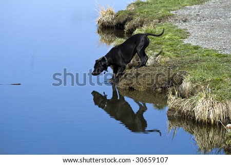 A pit bull fetching a stick - stock photo