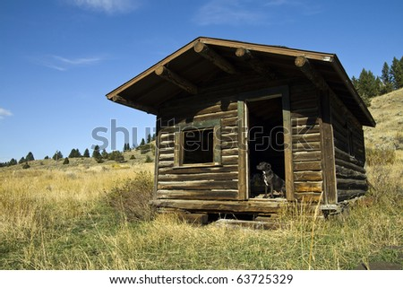A Pit Bull Terrier guards the entrance of an old homestead in Montana - stock photo