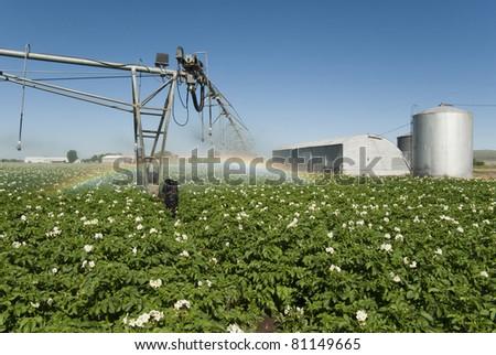 A pivot irrigation system waters a field of potatoes. - stock photo