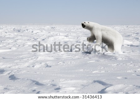 A polar bear in a natural landscape - Svalbard, Norway - stock photo