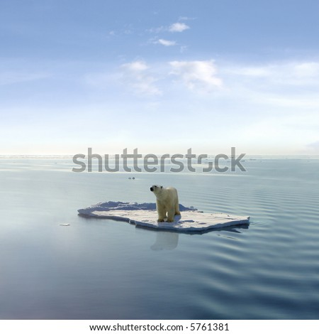 A polar bear managed to get on one of the last ice floes floating in the Arctic sea. - stock photo