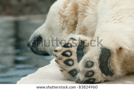 a polar bear sleeping on a rock - stock photo