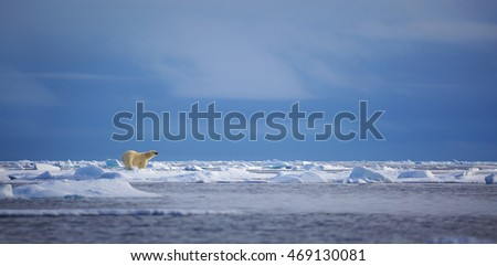 A polar bear stands atop an ice floe in the Svalbard archipelago.