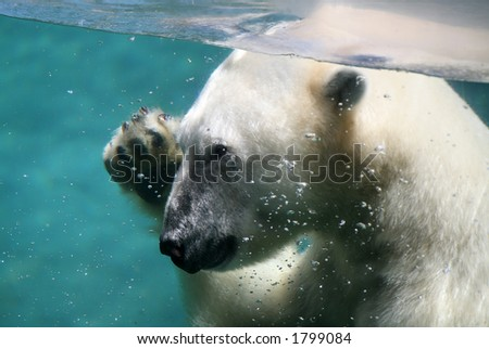 A polar bear under water waving - stock photo