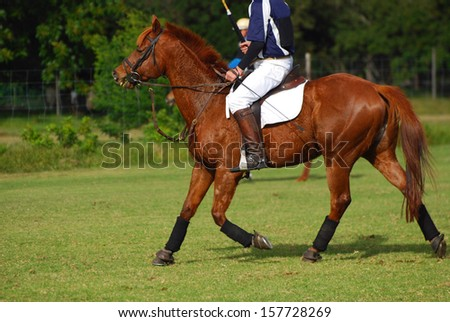 A polocrosse player riding on his horse on the field. - stock photo