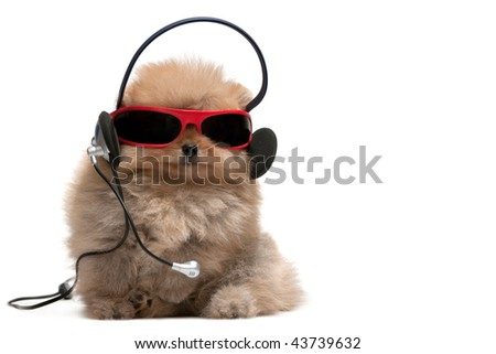 A pomeranian spitz is wearing sunglasses and headphones; isolated on white background