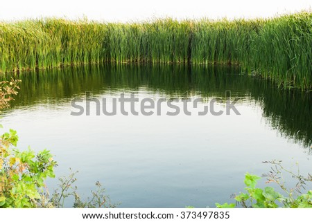A pond, surrounded by fall trees and green grass background - stock photo